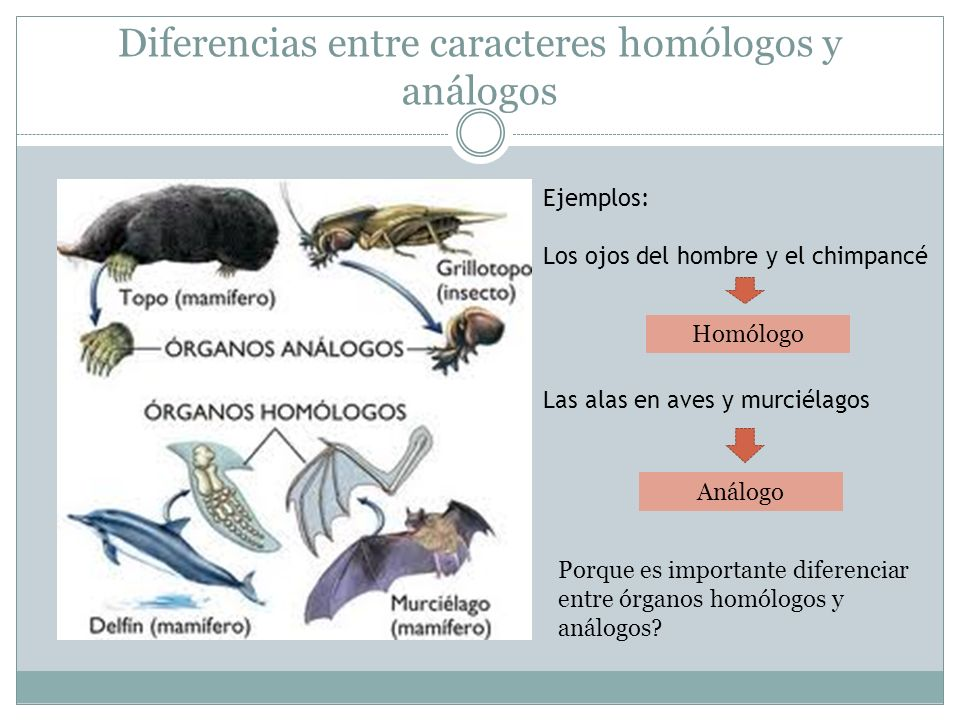 Diferencias entre caracteres homólogos y análogos