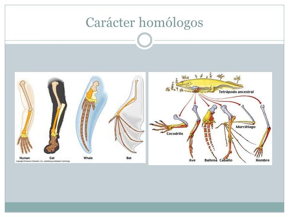 Carácter homólogos