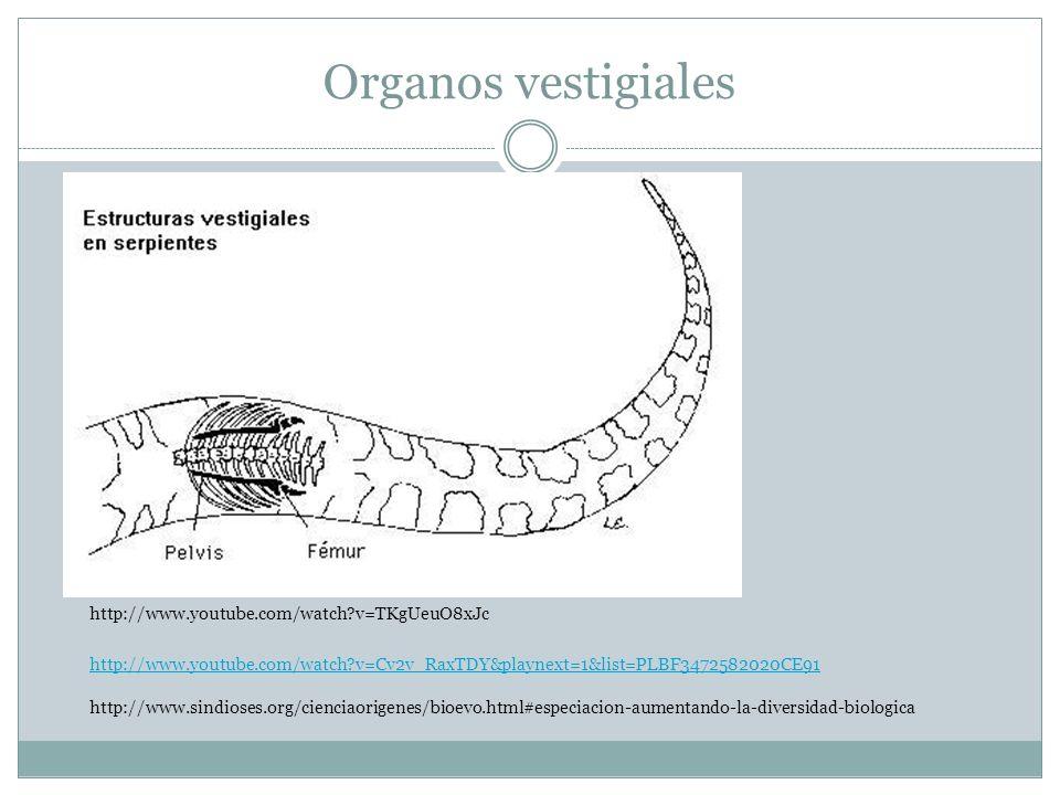 Organos vestigiales http://www.youtube.com/watch v=TKgUeuO8xJc