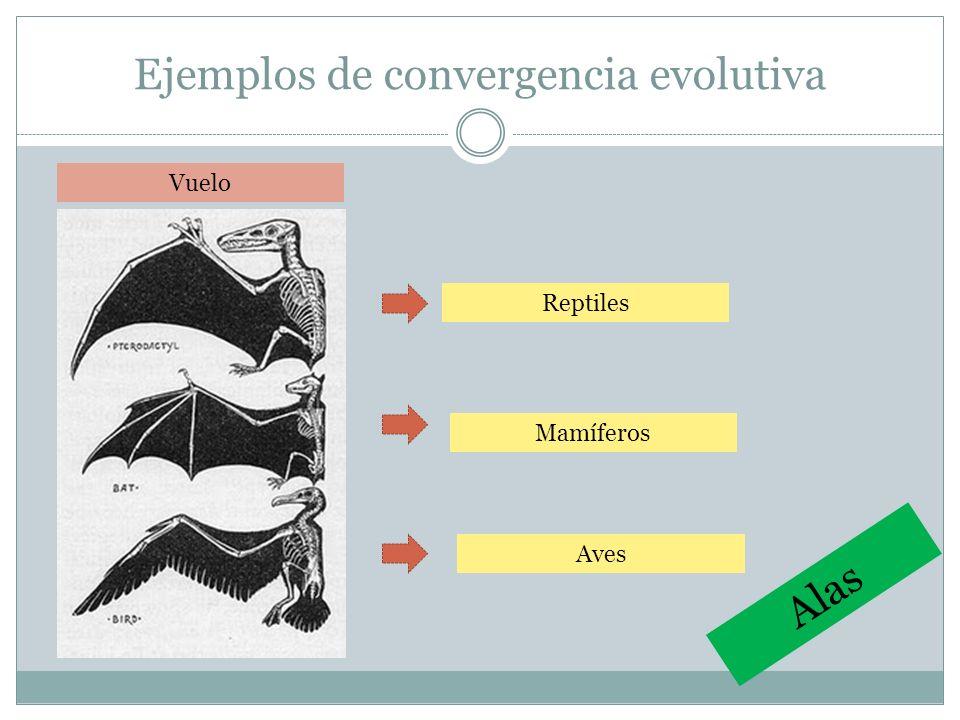 Ejemplos de convergencia evolutiva