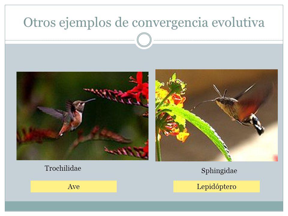 Otros ejemplos de convergencia evolutiva