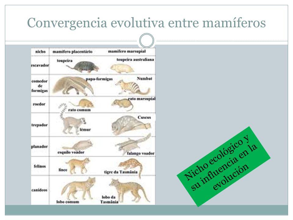 Convergencia evolutiva entre mamíferos