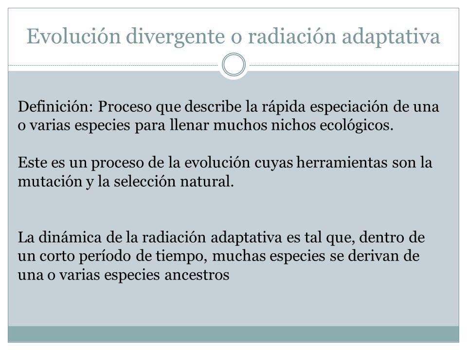 Evolución divergente o radiación adaptativa