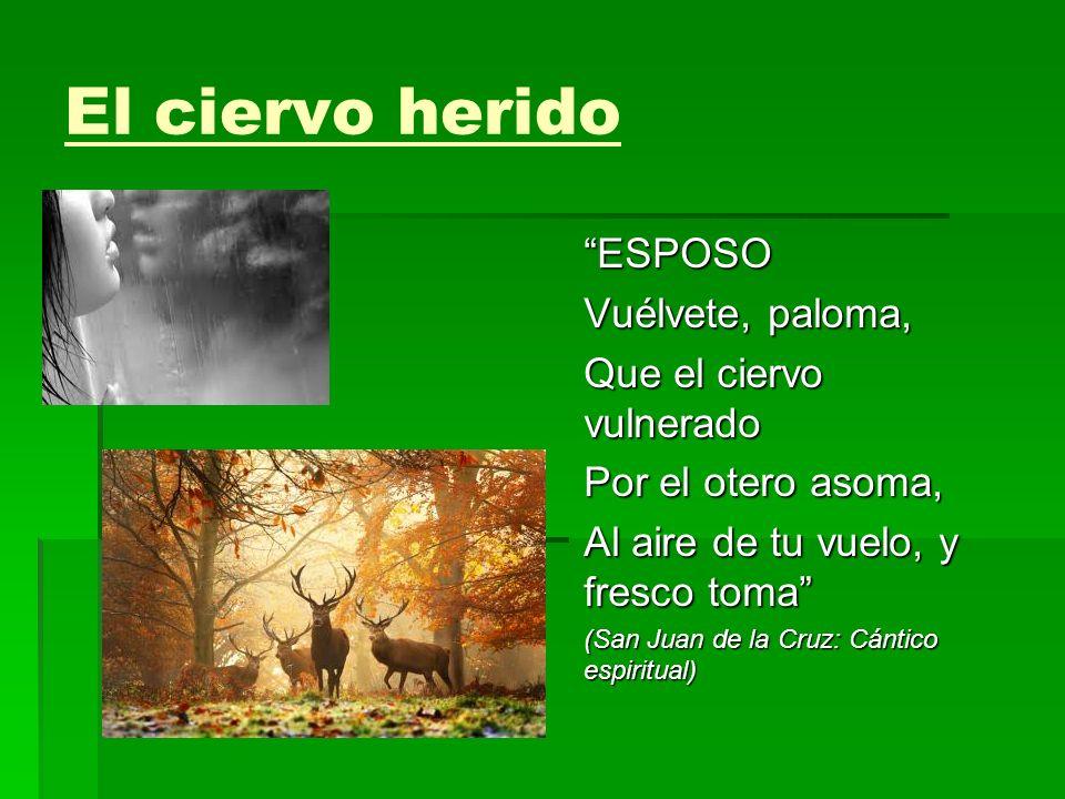 El ciervo herido ESPOSO Vuélvete, paloma, Que el ciervo vulnerado