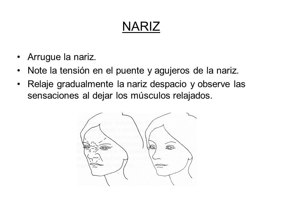 NARIZ Arrugue la nariz. Note la tensión en el puente y agujeros de la nariz.
