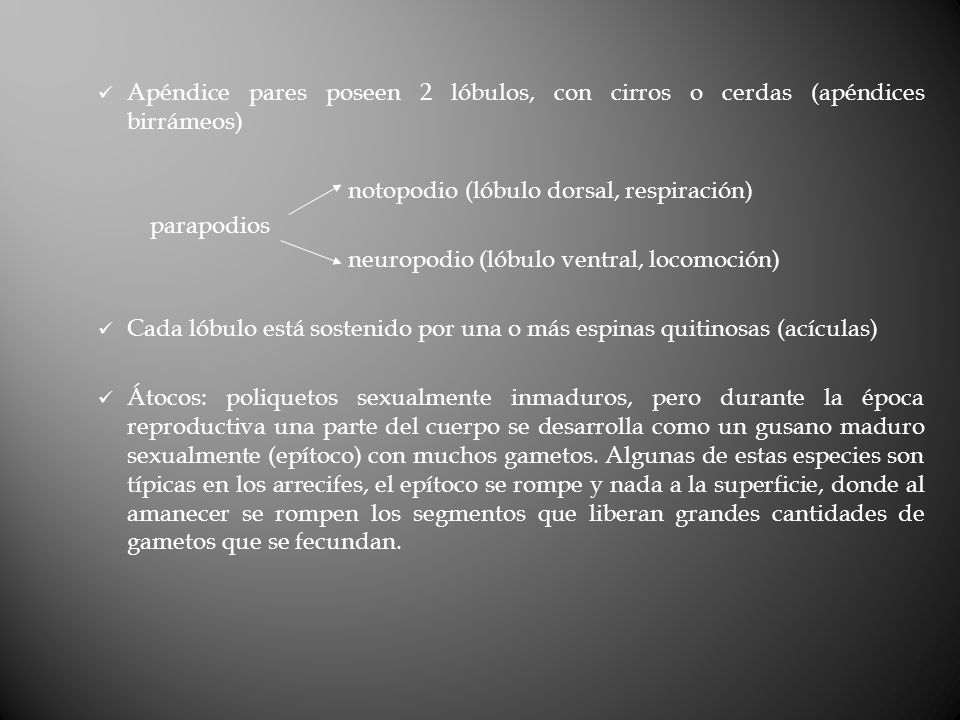 Apéndice pares poseen 2 lóbulos, con cirros o cerdas (apéndices birrámeos)