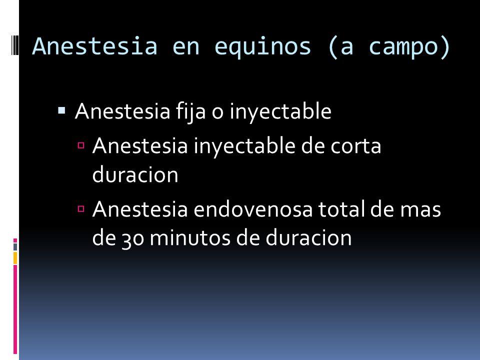 Anestesia en equinos (a campo)