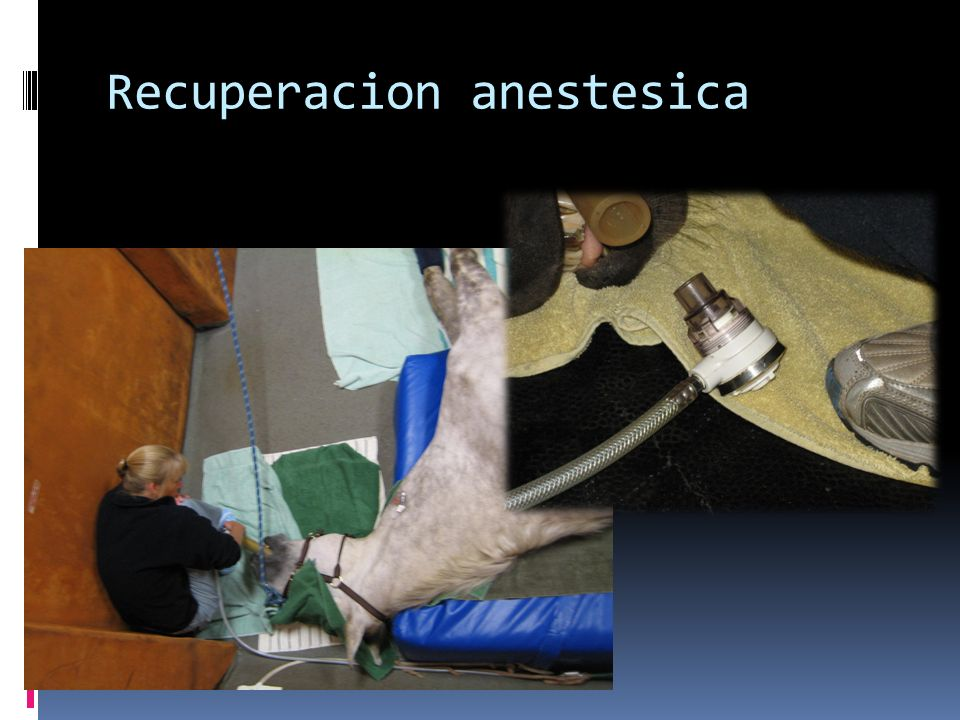 Recuperacion anestesica