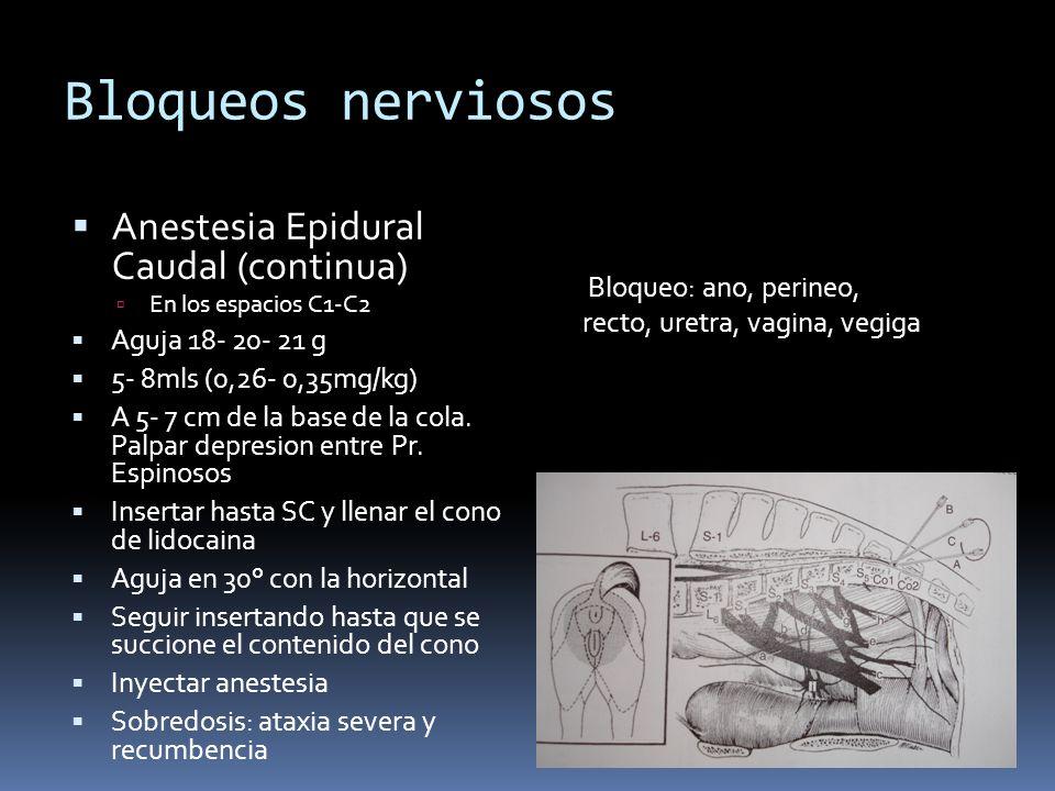 Bloqueos nerviosos Anestesia Epidural Caudal (continua)