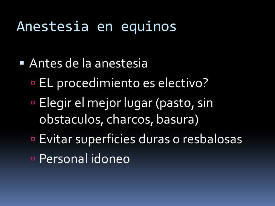 Anestesia en equinos Antes de la anestesia