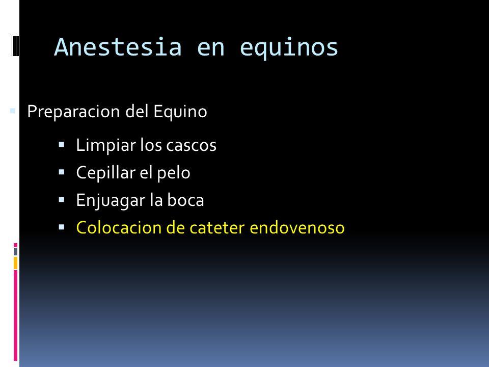 Anestesia en equinos Preparacion del Equino Limpiar los cascos