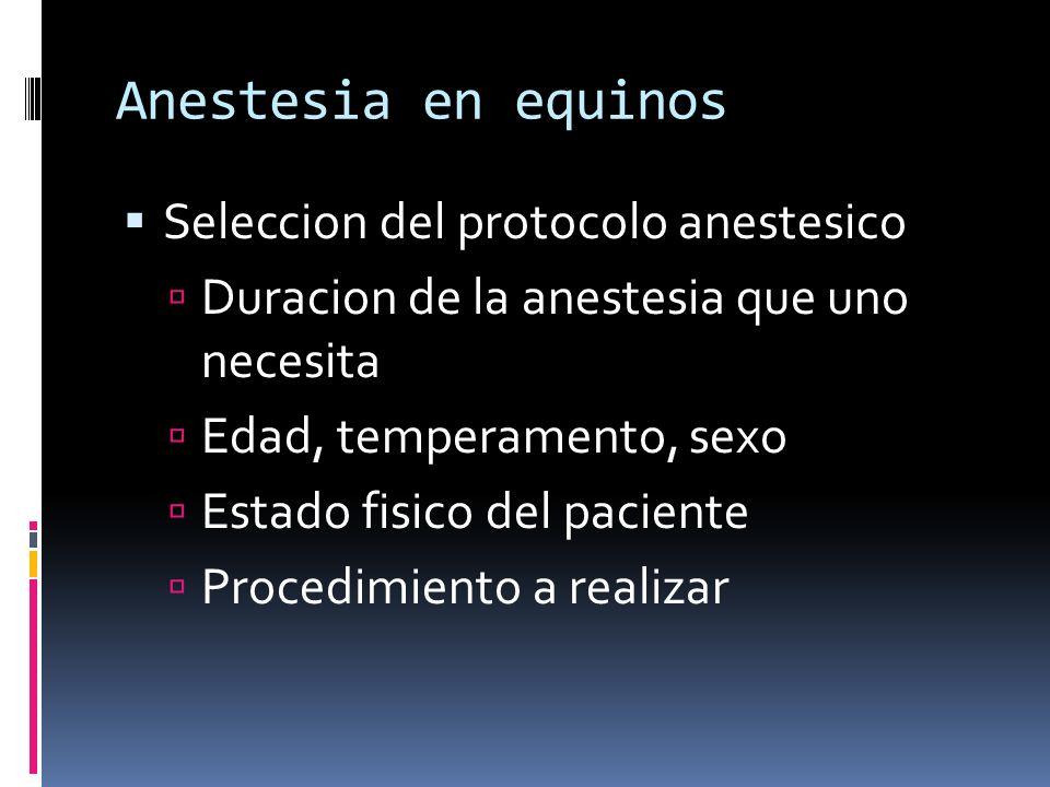Anestesia en equinos Seleccion del protocolo anestesico