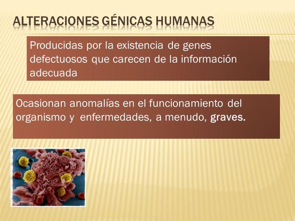 Alteraciones génicas humanas
