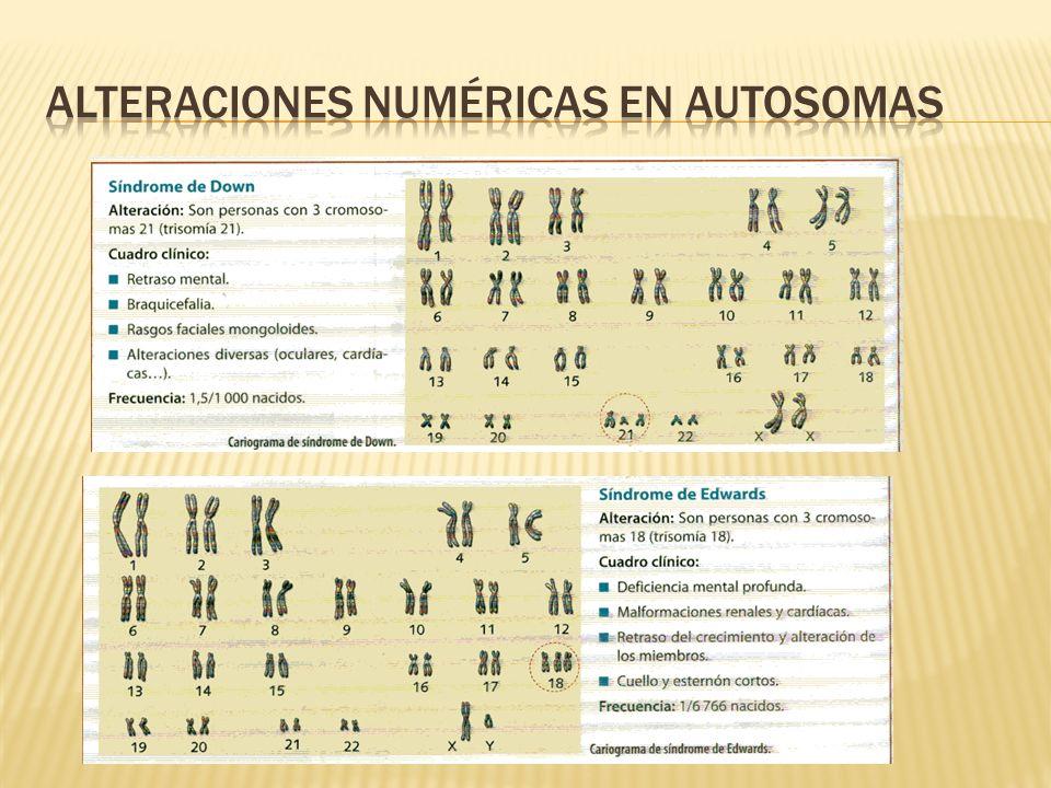 Alteraciones numéricas en autosomas
