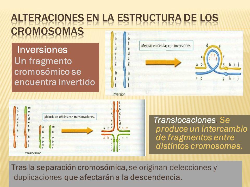 Alteraciones en la estructura de los cromosomas