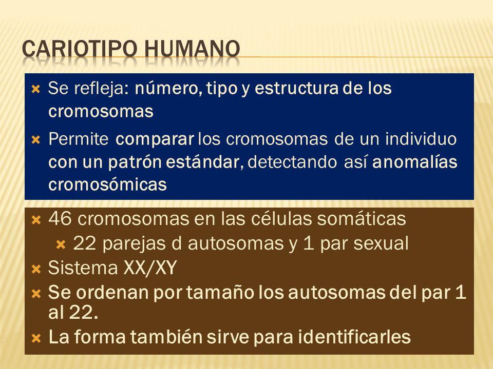 CARIOTIPO HUMANO 46 cromosomas en las células somáticas