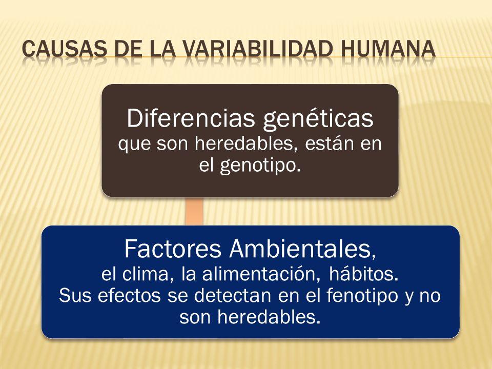 Causas de la Variabilidad humana