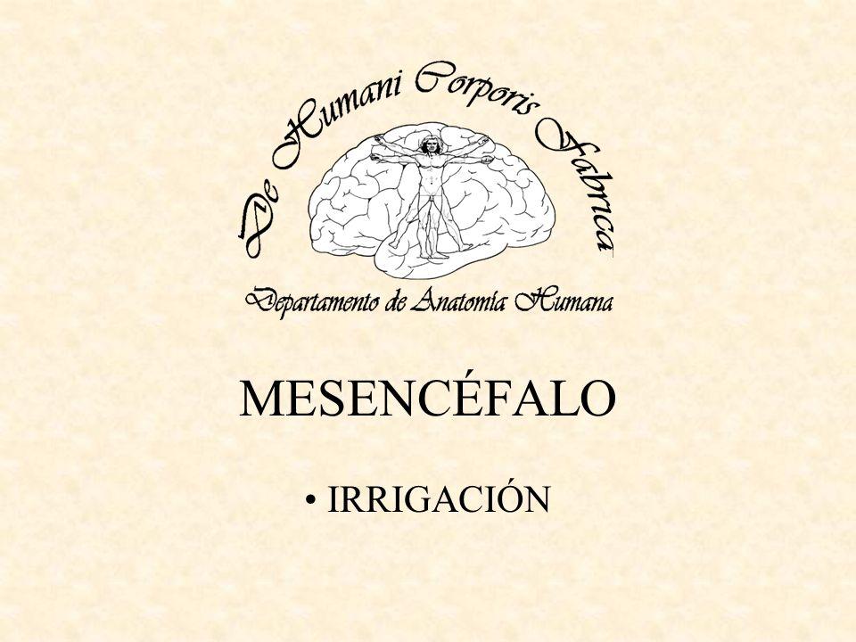 MESENCÉFALO IRRIGACIÓN
