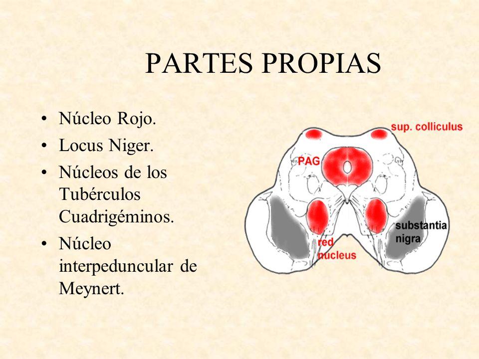 PARTES PROPIAS Núcleo Rojo. Locus Niger.