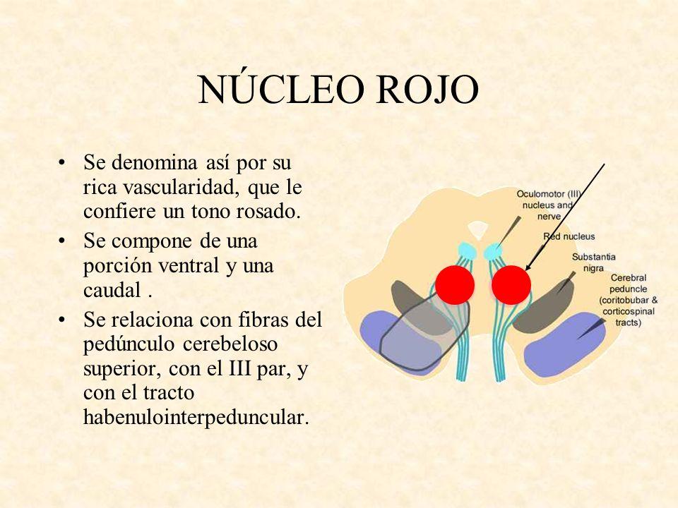 NÚCLEO ROJO Se denomina así por su rica vascularidad, que le confiere un tono rosado. Se compone de una porción ventral y una caudal .