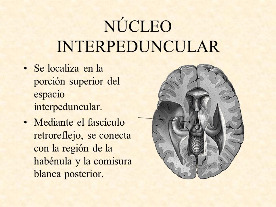 NÚCLEO INTERPEDUNCULAR