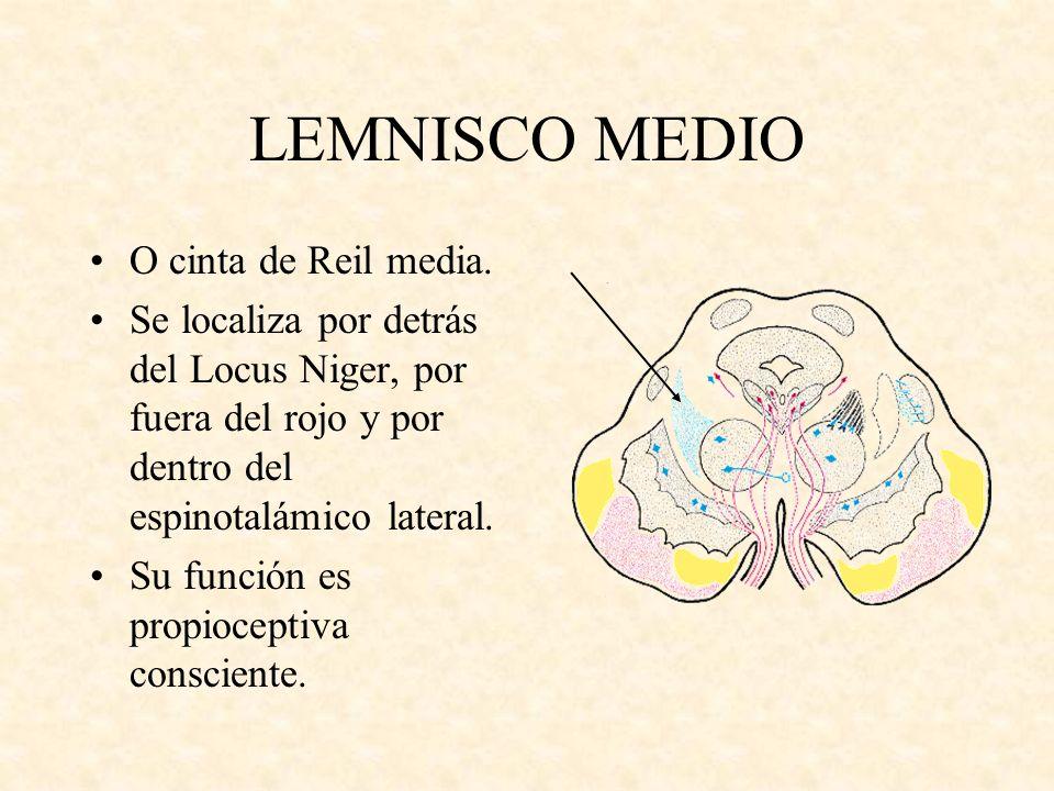 LEMNISCO MEDIO O cinta de Reil media.