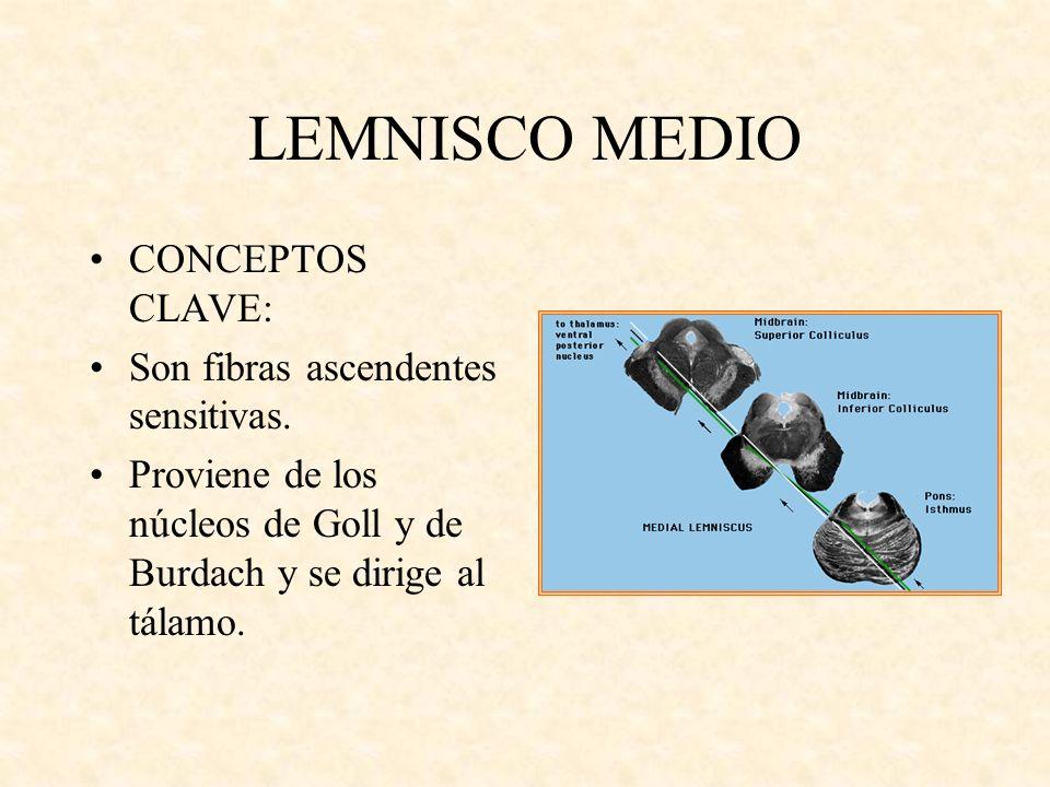 LEMNISCO MEDIO CONCEPTOS CLAVE: Son fibras ascendentes sensitivas.