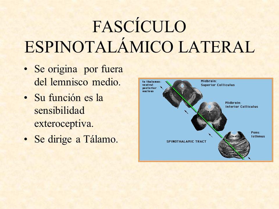 FASCÍCULO ESPINOTALÁMICO LATERAL