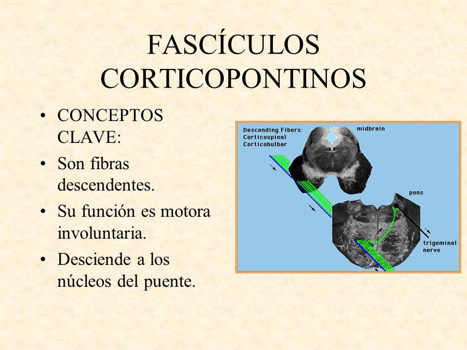FASCÍCULOS CORTICOPONTINOS