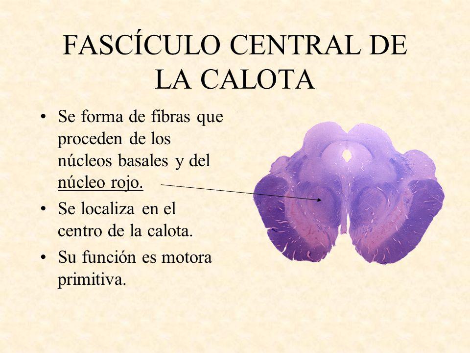 FASCÍCULO CENTRAL DE LA CALOTA