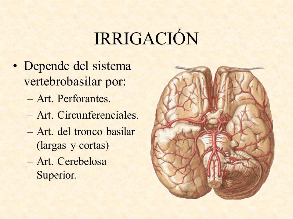 IRRIGACIÓN Depende del sistema vertebrobasilar por: Art. Perforantes.
