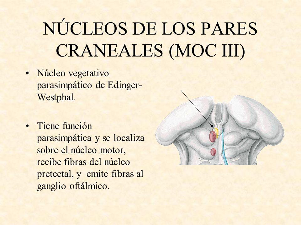 NÚCLEOS DE LOS PARES CRANEALES (MOC III)