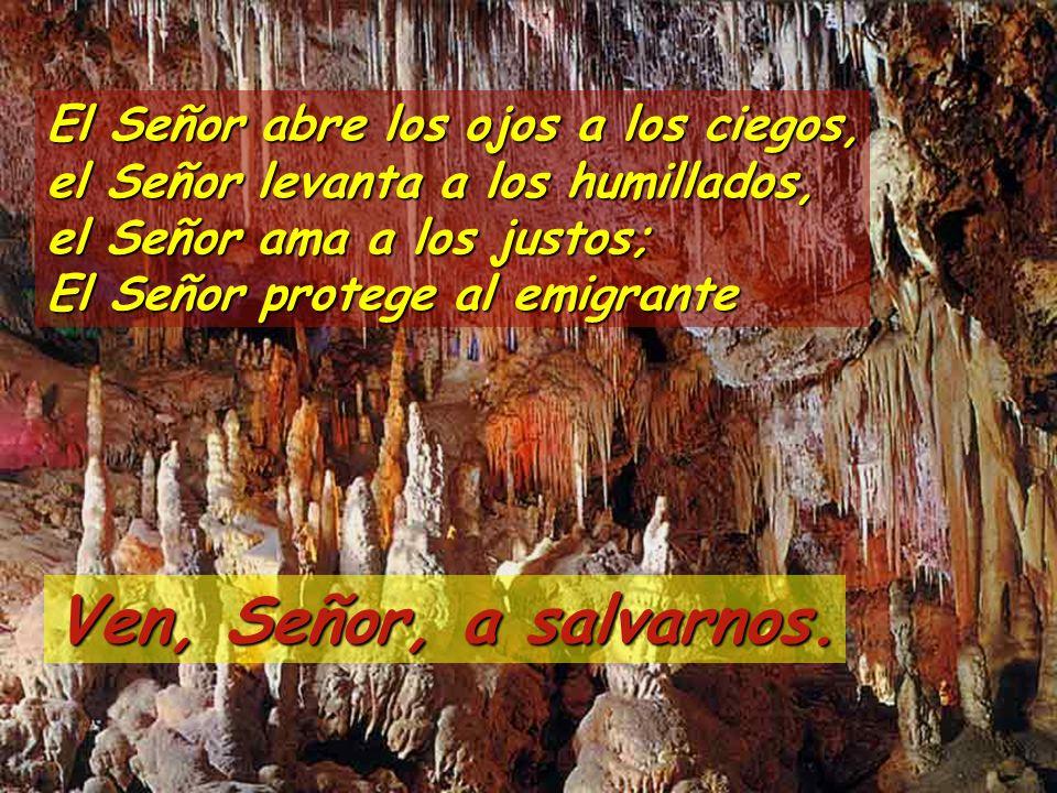 El Señor abre los ojos a los ciegos, el Señor levanta a los humillados, el Señor ama a los justos; El Señor protege al emigrante