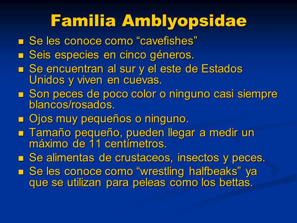 Familia Amblyopsidae Se les conoce como cavefishes