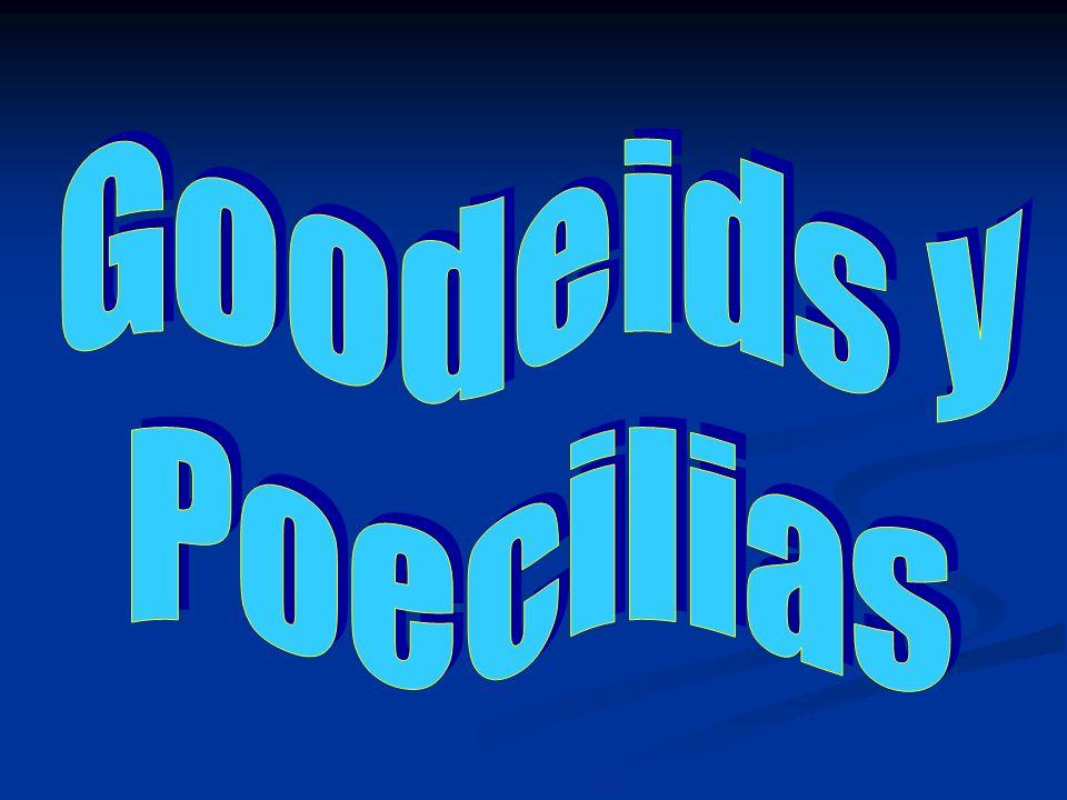 Goodeids y Poecilias