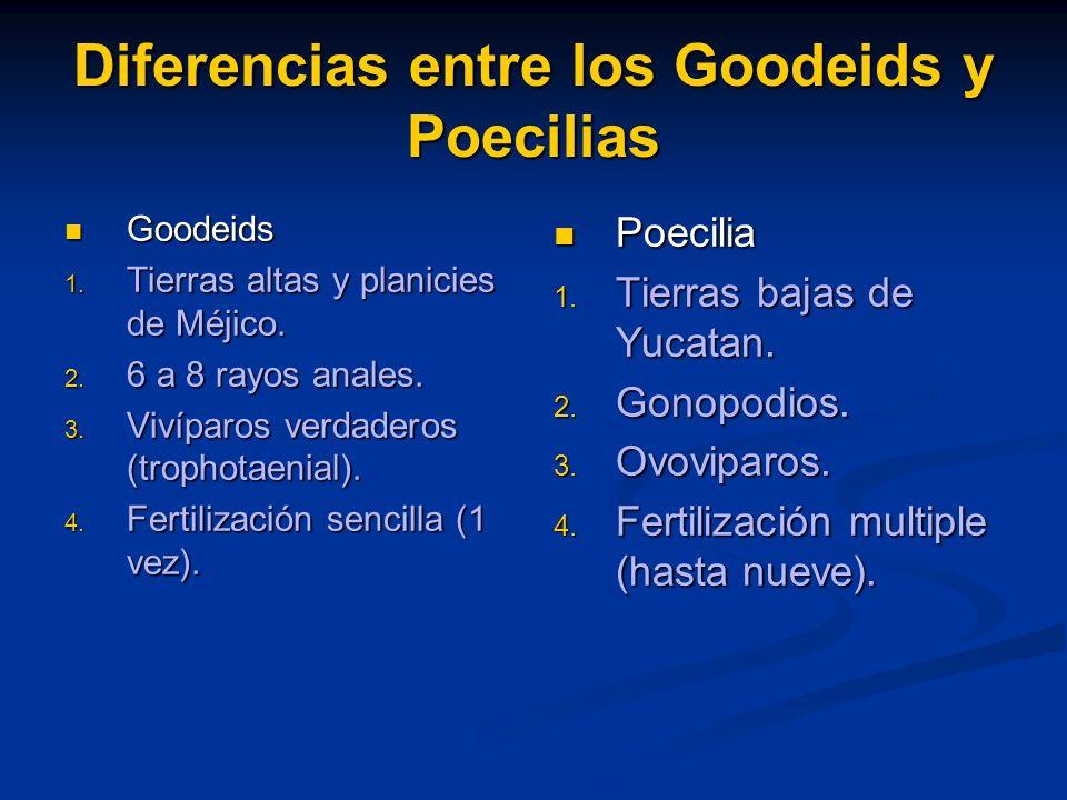 Diferencias entre los Goodeids y Poecilias