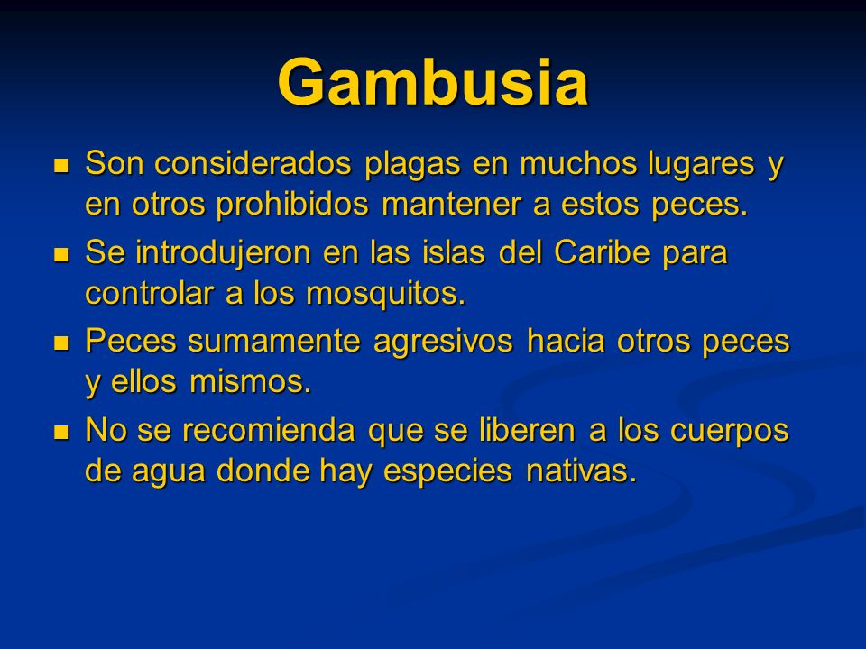 Gambusia Son considerados plagas en muchos lugares y en otros prohibidos mantener a estos peces.
