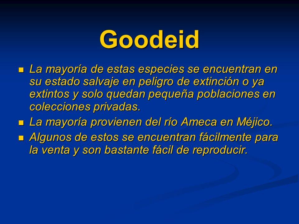 Goodeid
