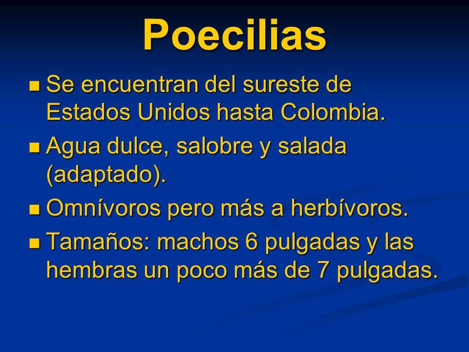 Poecilias Se encuentran del sureste de Estados Unidos hasta Colombia.