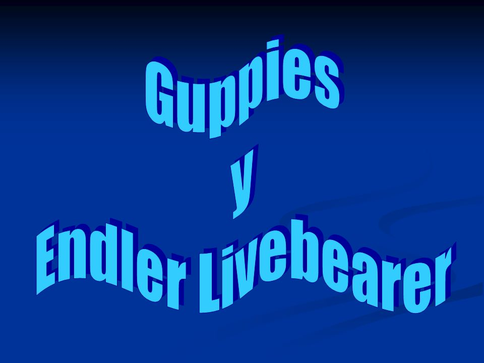 Guppies y Endler Livebearer