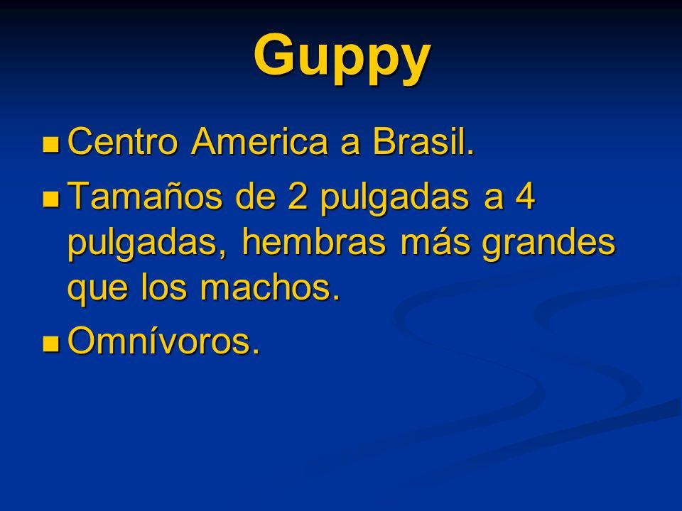 Guppy Centro America a Brasil.