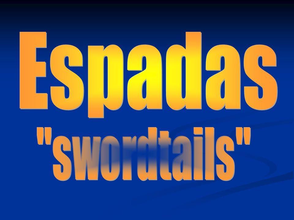 Espadas swordtails