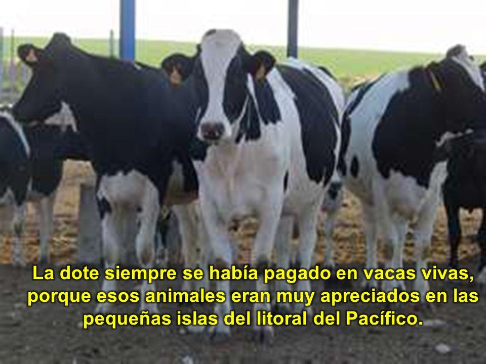 La dote siempre se había pagado en vacas vivas, porque esos animales eran muy apreciados en las pequeñas islas del litoral del Pacífico.