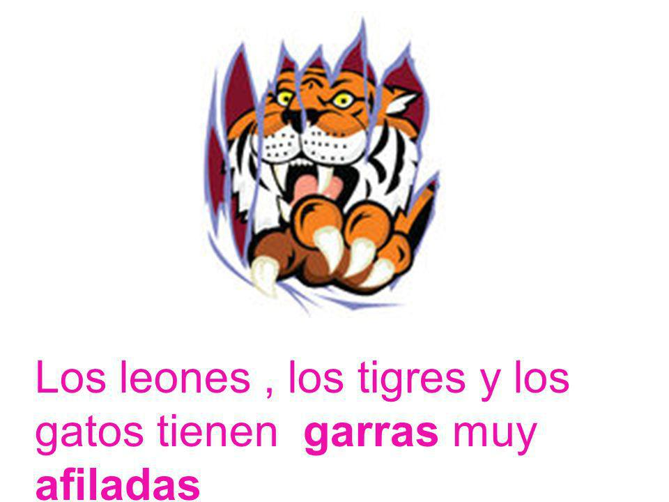 Los leones , los tigres y los gatos tienen garras muy afiladas