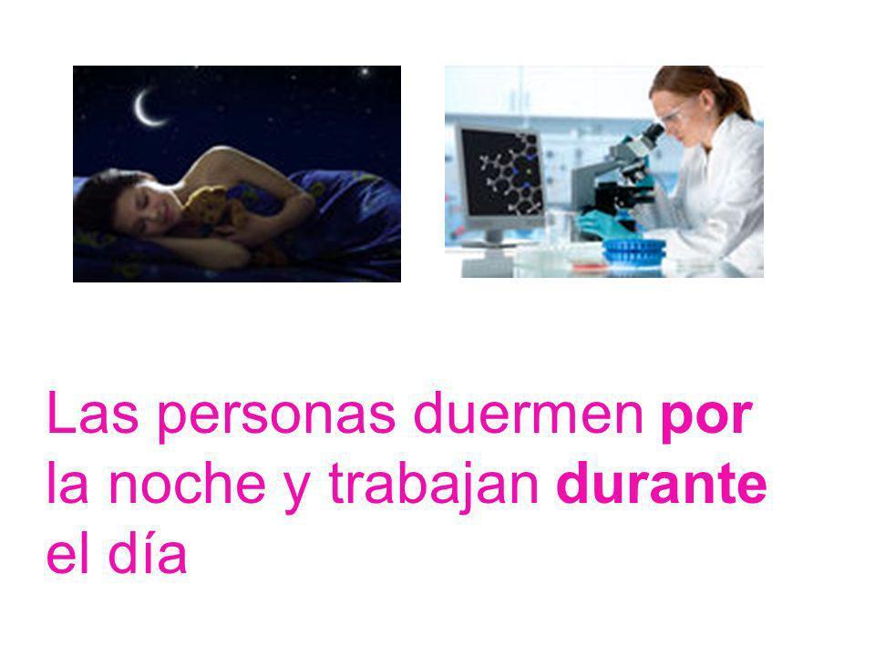 Las personas duermen por la noche y trabajan durante el día