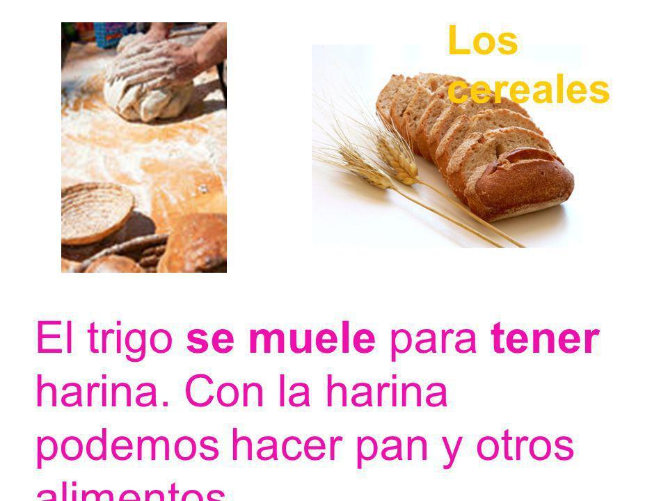 Los cereales El trigo se muele para tener harina. Con la harina podemos hacer pan y otros alimentos