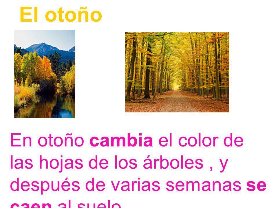El otoño En otoño cambia el color de las hojas de los árboles , y después de varias semanas se caen al suelo.