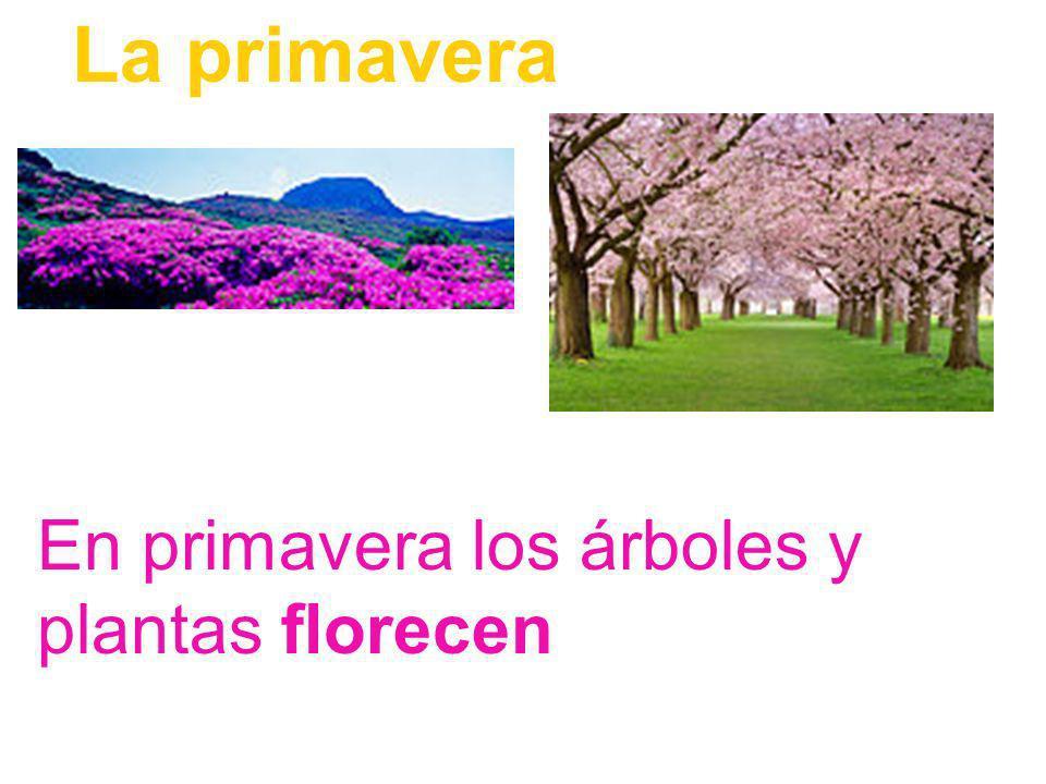 La primavera En primavera los árboles y plantas florecen