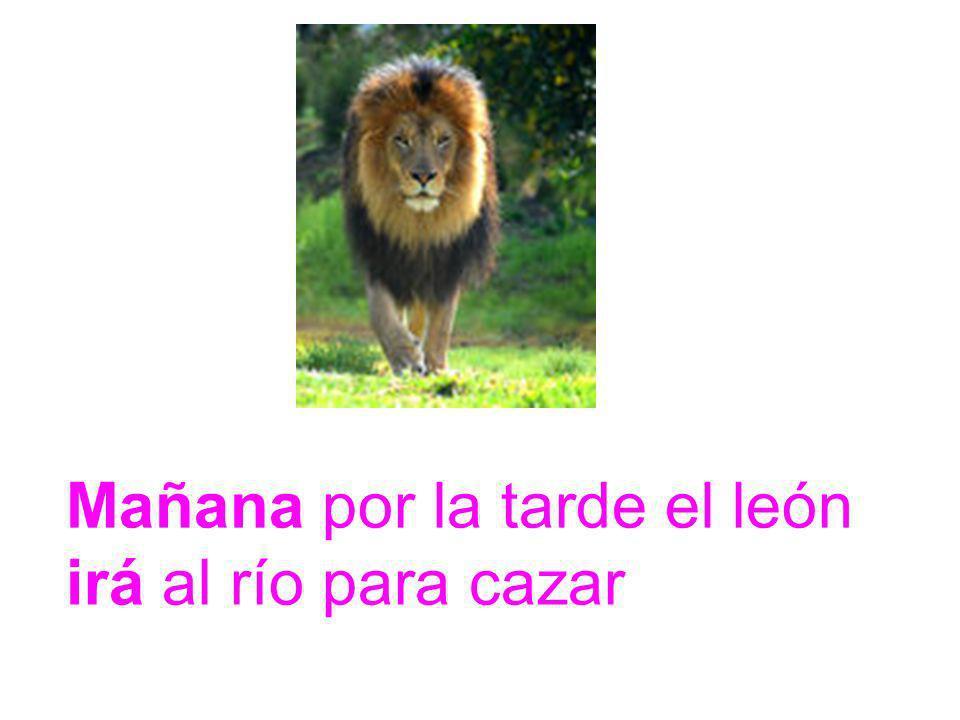 Mañana por la tarde el león irá al río para cazar