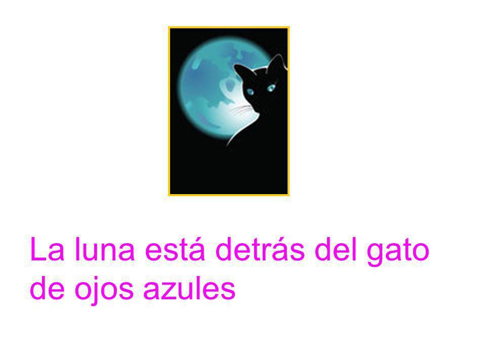 La luna está detrás del gato de ojos azules